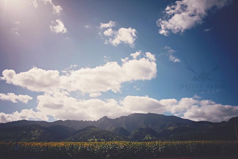 north shore hawaii sunflower field
